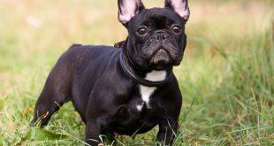 Anche i cani invecchiano come l'uomo: ecco come aiutare Fido