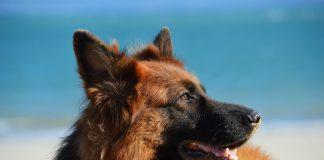 Sverminazioni e vaccinazioni nel cane: quando vanno fatte