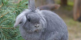 Coniglio nano: tutto quello che devi sapere su questo simpatico animale