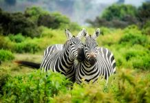 Kenya Safaris: il tuo punto di partenza per Watamu