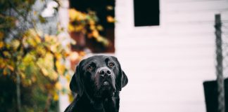 Gravidanza di un cane: come affrontarla al meglio